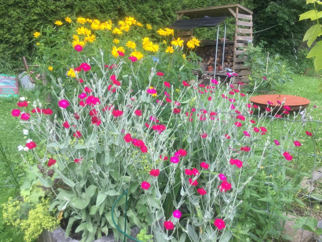 Nelken und Sonnenblumen