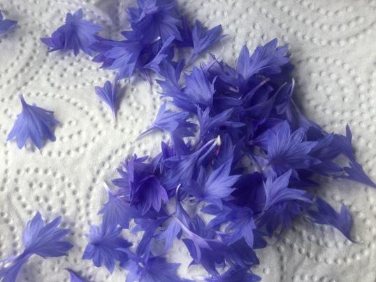 Kornblumen shene einfach nur schön aus