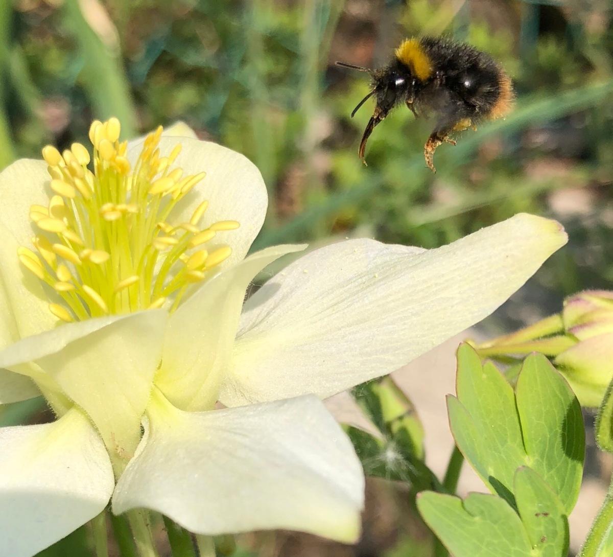 Mein wilder Garten - ein Paradies für Insekten und Vögel